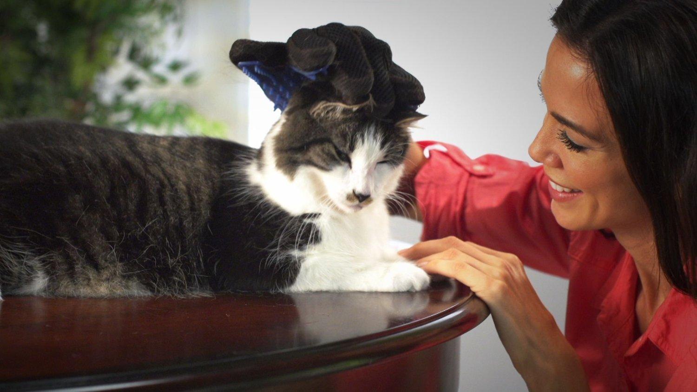Easylifer Quitapelos Mascotas Cepillo de Gatos// Perro Guante Masaje