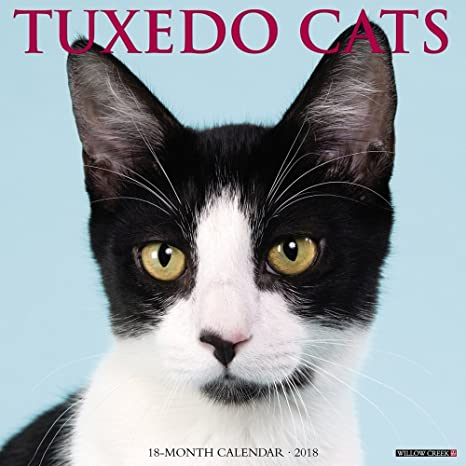 Tuxedo gatos 2018 calendario de pared