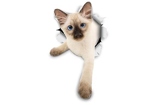 Winston Bear 3d Cat Stickers 2 Pack Siamese Kitten
