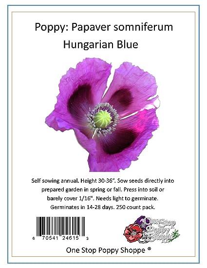 Amazon 250 Poppy Flower Seeds Papaver Somniferum Blue