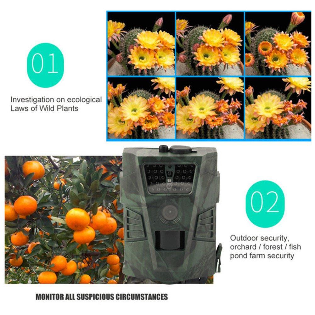 Vida Silvestre Trampa cámara de caza Cámara de caza HD con visión nocturna por infrarrojos, Rango de visualización de LED para al aire libre Naturaleza, ...