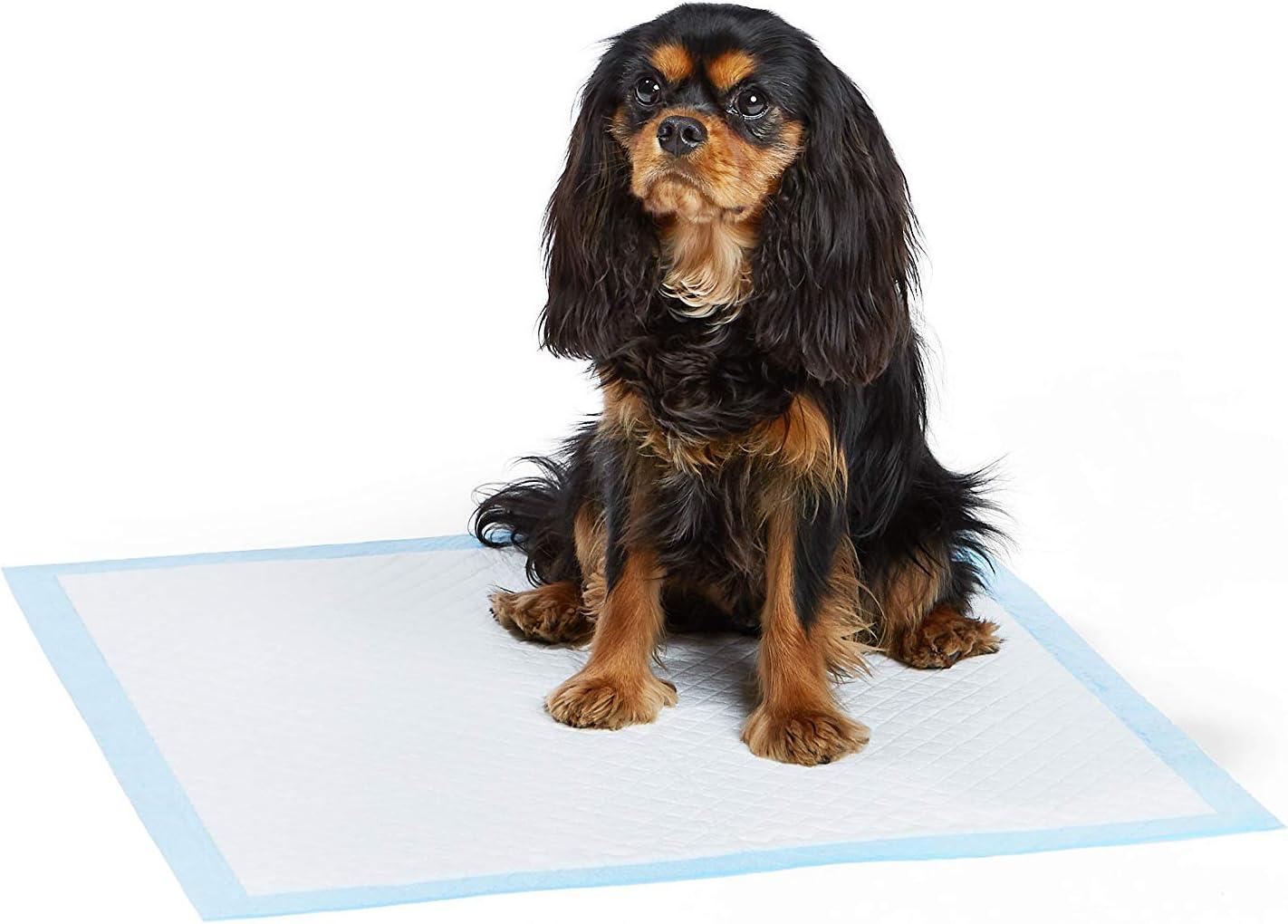 AmazonBasics - Empapadores de adiestramiento para mascotas y cachorros, muy resistentes, Normal, 80 unidades