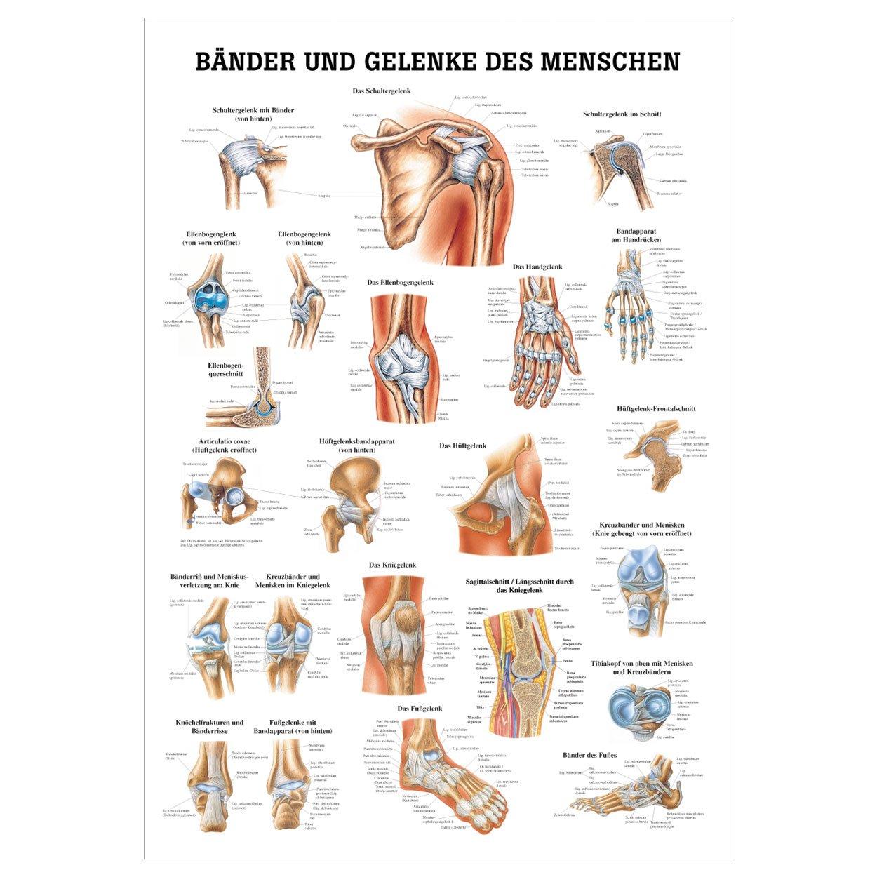 Gemütlich Anatomie Des Hüftgelenks Bänder Zeitgenössisch ...