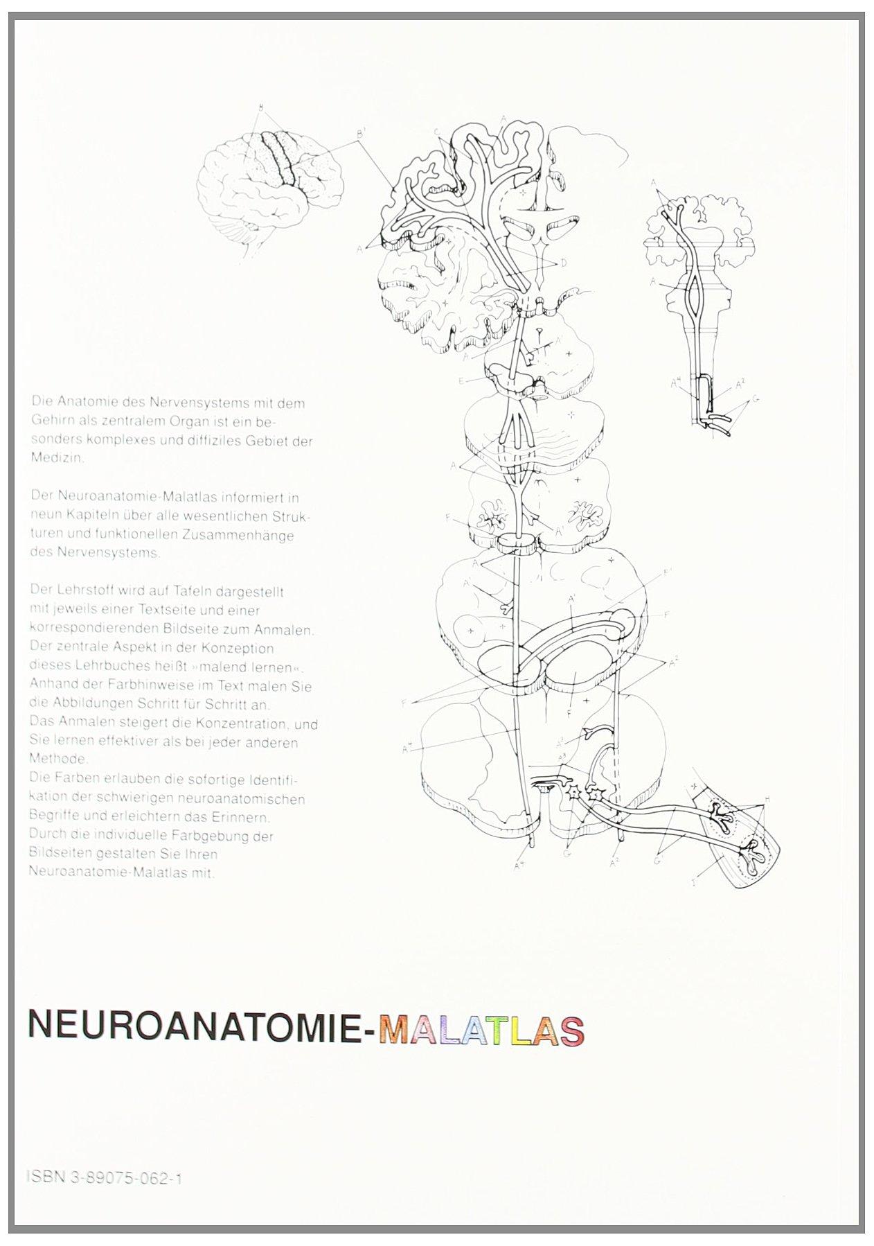 Neuroanatomie - Malatlas: Lawrence M. Elson: 9783890750620: Amazon ...