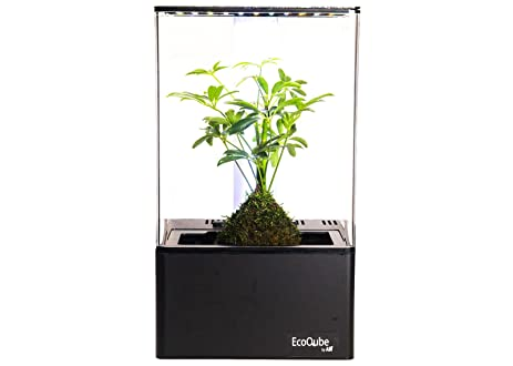EcoQube Air   Decorative Hydroponics Indoor Herb Home Garden Kit With LED Grow  Light, Basil