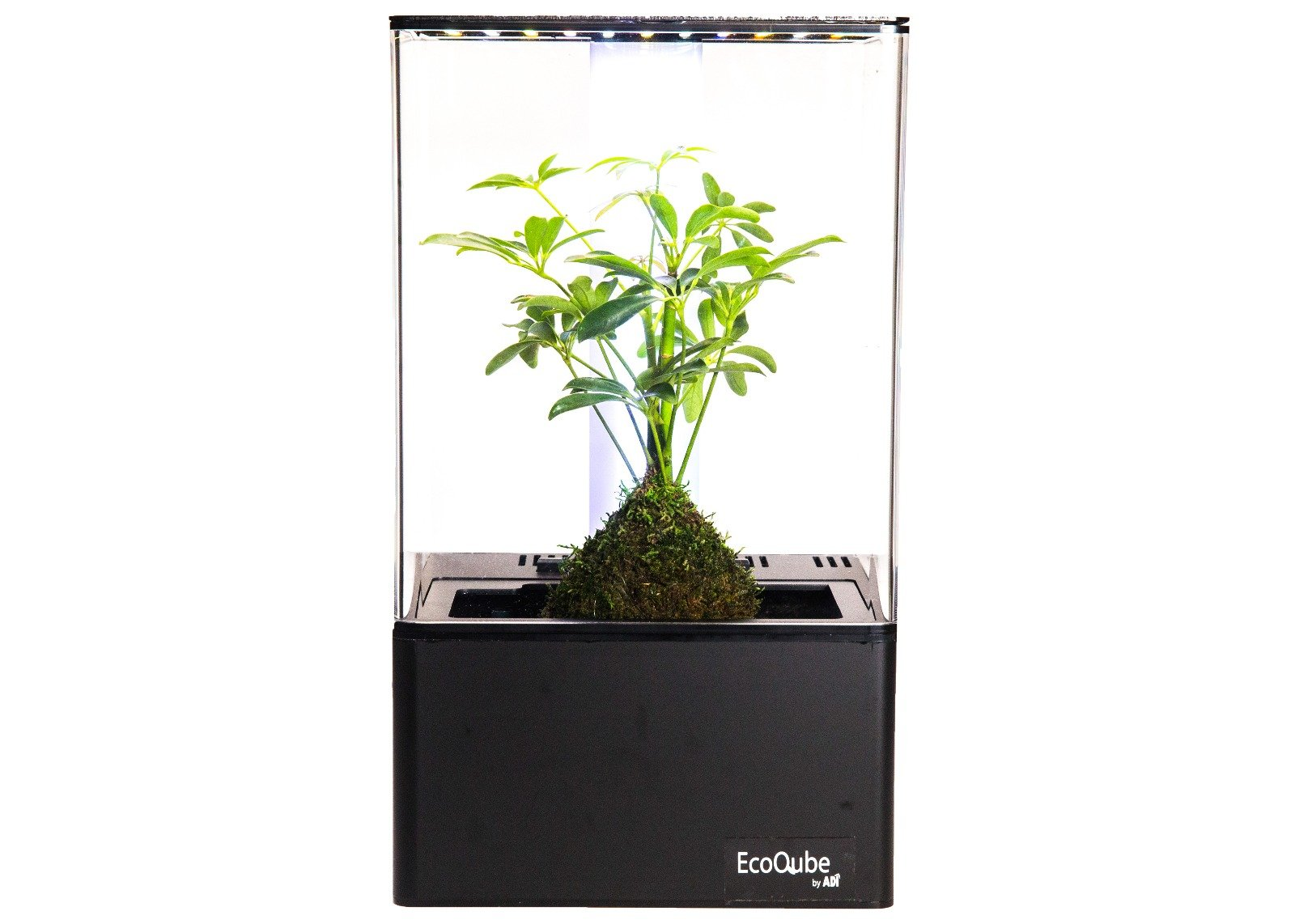 EcoQube Air - Decorative Hydroponics Indoor Herb Home Garden Kit with Full Spectrum LED Grow Light and True Hepa-Type Filter Air Purifier (Premium UV Filter Model) by EcoQube