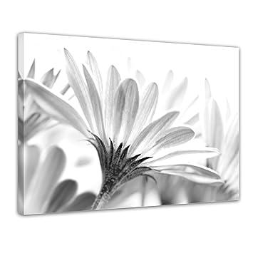 Kunstdruck Blume Schwarz Weiss Bild Auf Leinwand 50x40 Cm