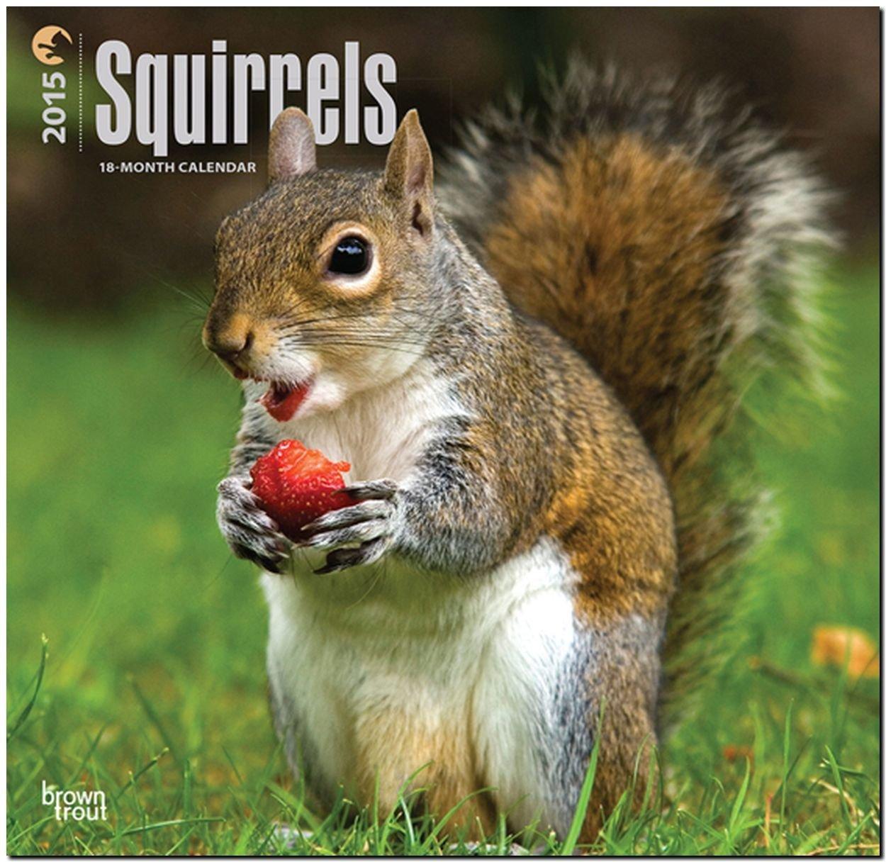 Squirrels 2015 - Eichhörnchen - Grauhörnchen: Original BrownTrout-Kalender [Mehrsprachig] [Kalender]