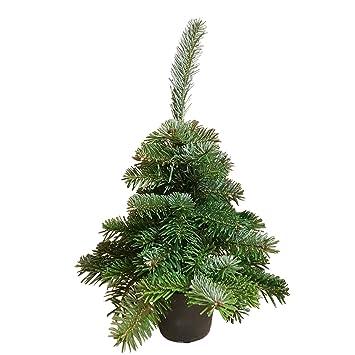 Echter Tannenbaum (30 cm hoch): frischer Weihnachtsbaum von Hand ...