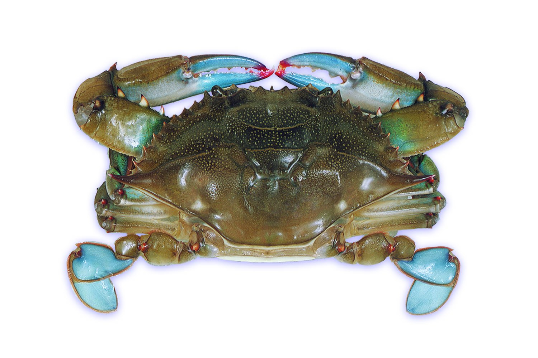 Raw Domestic Soft Shell Crabs (12 Ct. Primes) - Frozen