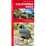California Birds: A Folding Pocket Guide to Familiar Species (A Pocket Naturalist Guide)