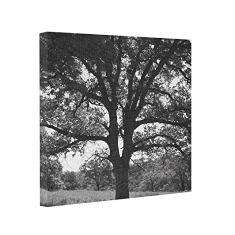 Photo prints on canvas oak tree spring meadow black and white printing photos on canvas nature