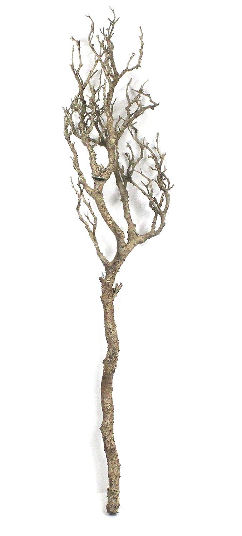 Ramo decorativo, naturale, 90 cm, senza insetticida DPI