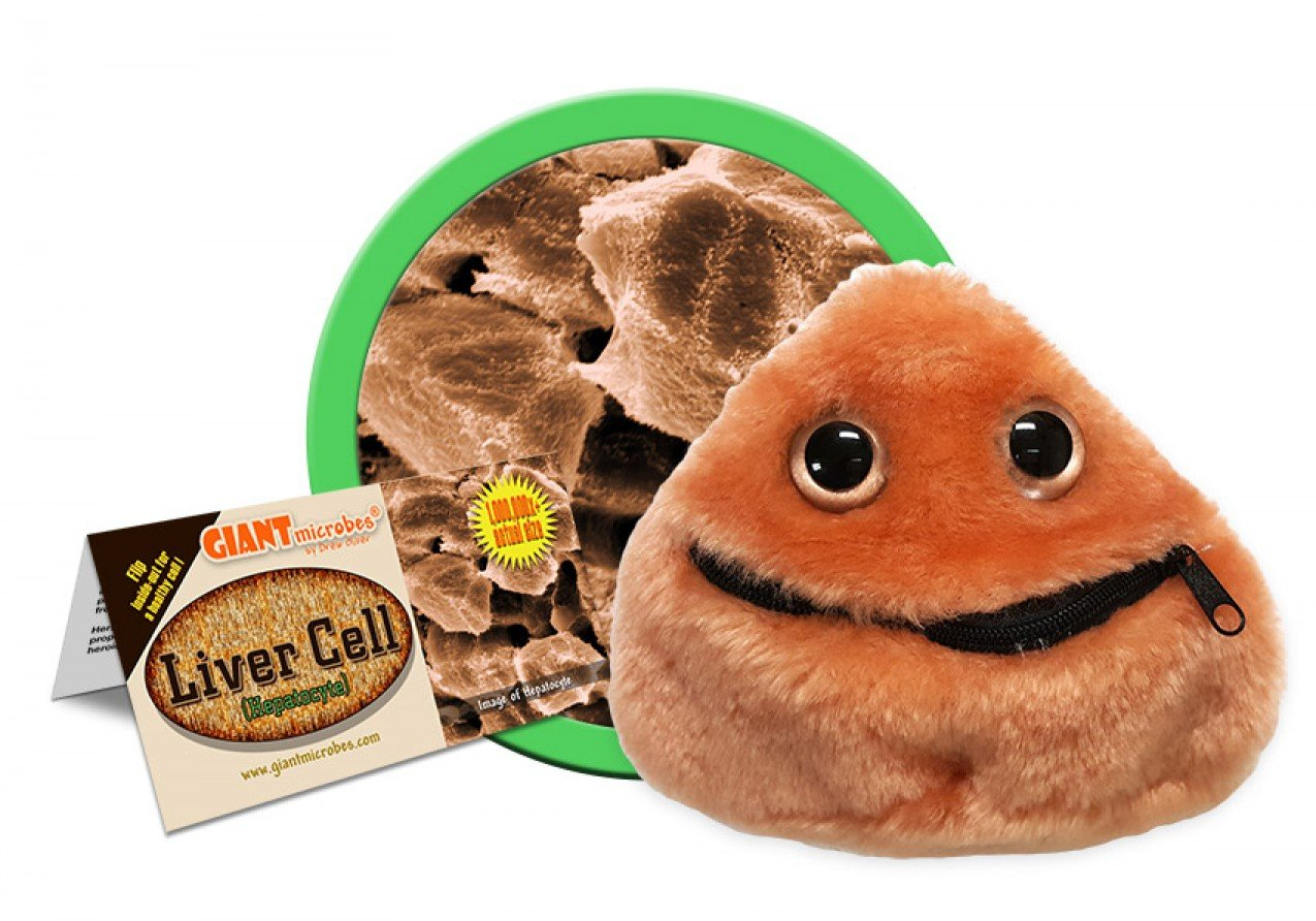 Amazon.com  Giant Microbes Liver Cell (Hepatocyte) Plush  Toys   Games 1f2cef439