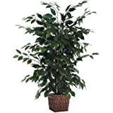 Vickerman 4' Artificial Ficus in Square Willow Container