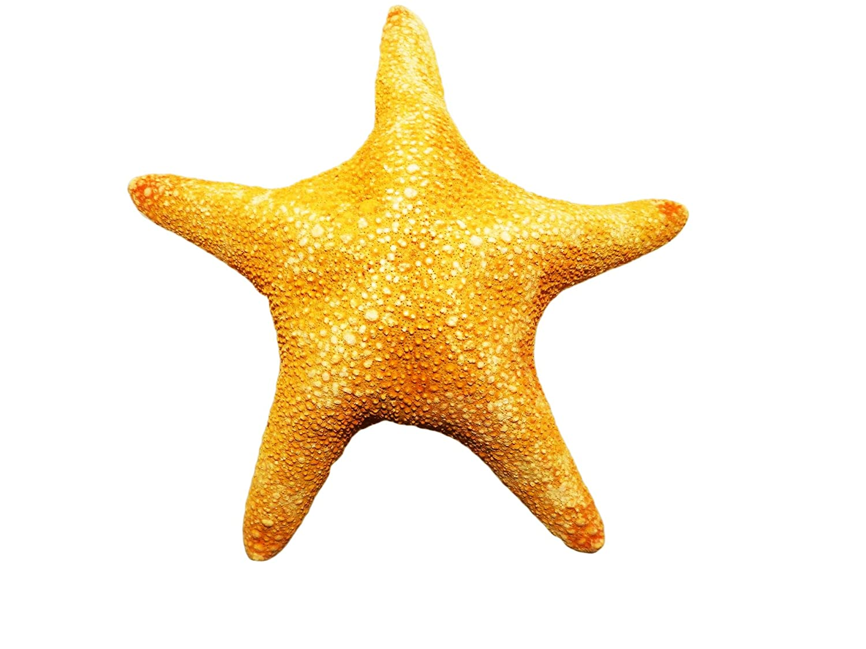 Amazon.com: Jungle Starfish 8-10 Inches By SeaSationals: Home & Kitchen