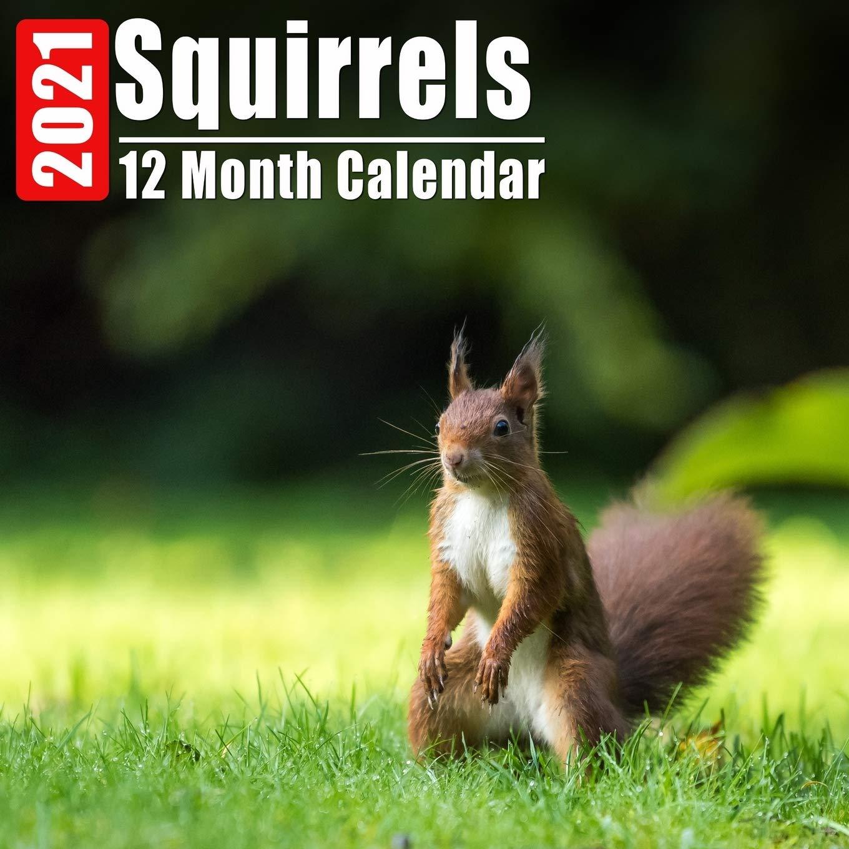 Squirrel Calendar 2021 Calendar 2021 Squirrels: Cute Squirrel Photos Monthly Mini
