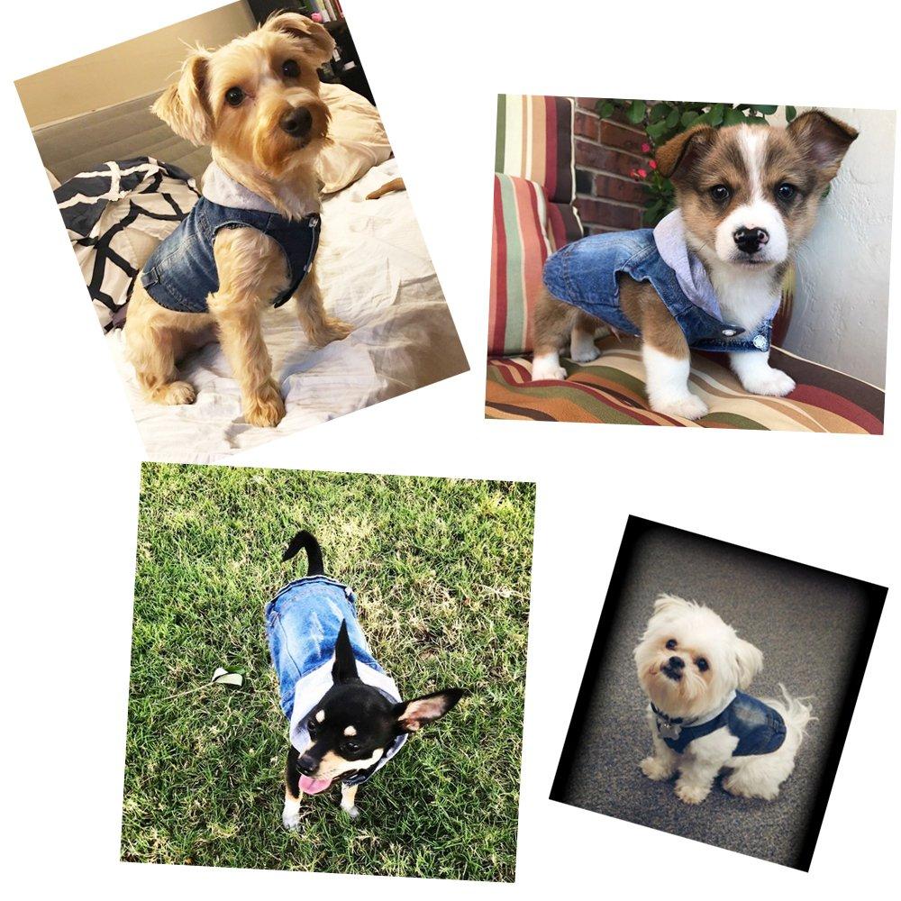 Color Azul SILD L medianos con Capucha para Perros peque/ños Chaqueta Vaquera para Perro