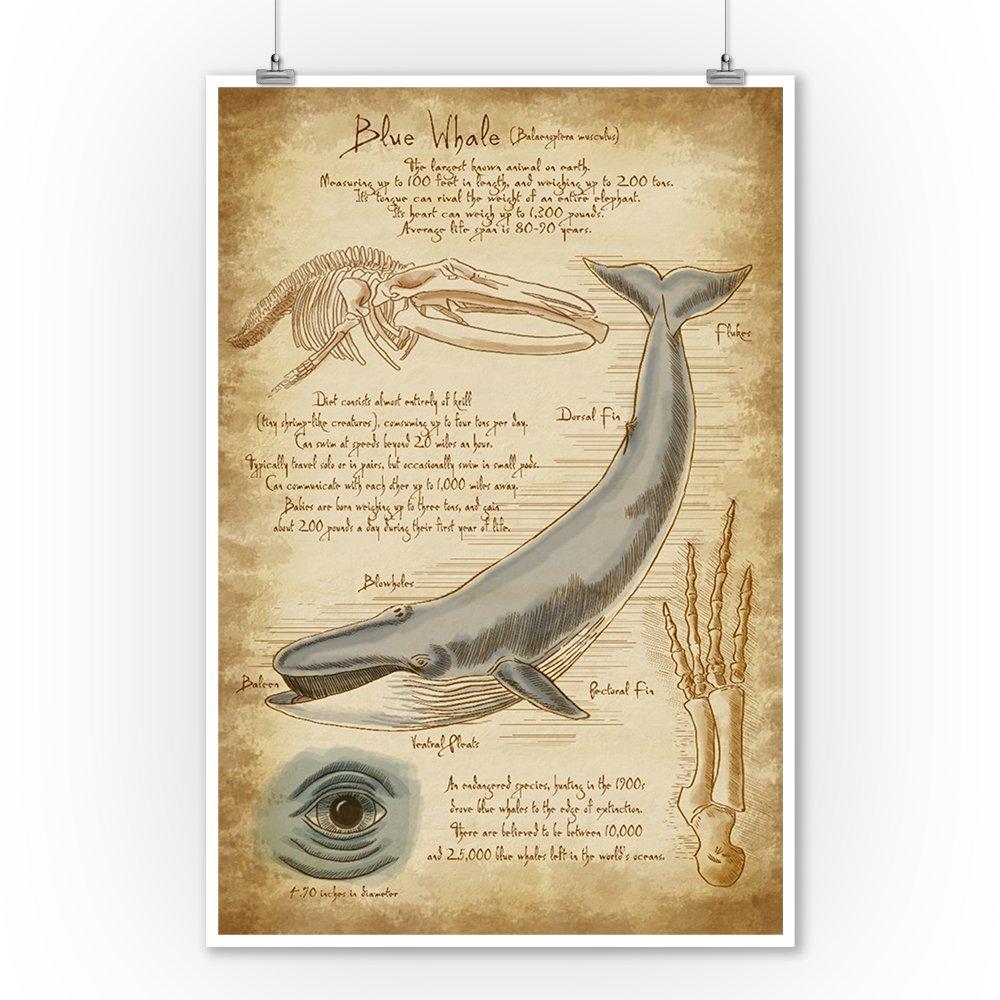 Amazon.com: Blue Whale da Vinci Artwork (9x12 Art Print, Wall Decor ...