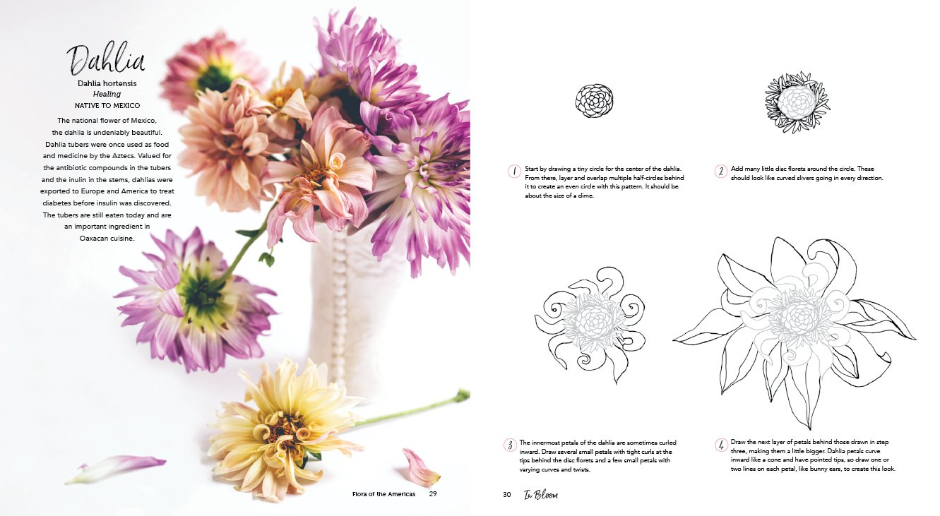 In Bloom A Step By Step Guide To Drawing Lush Florals Rachel