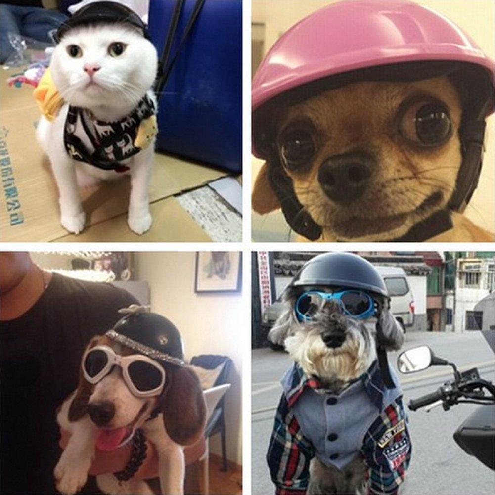 CHENG YUAN 1 unid Cascos Mascotas Ridding Cap Perrito Cachorro Motocicleta Proteger Perro gato de plástico Disfraces Sombrero de motorista (orange): ...