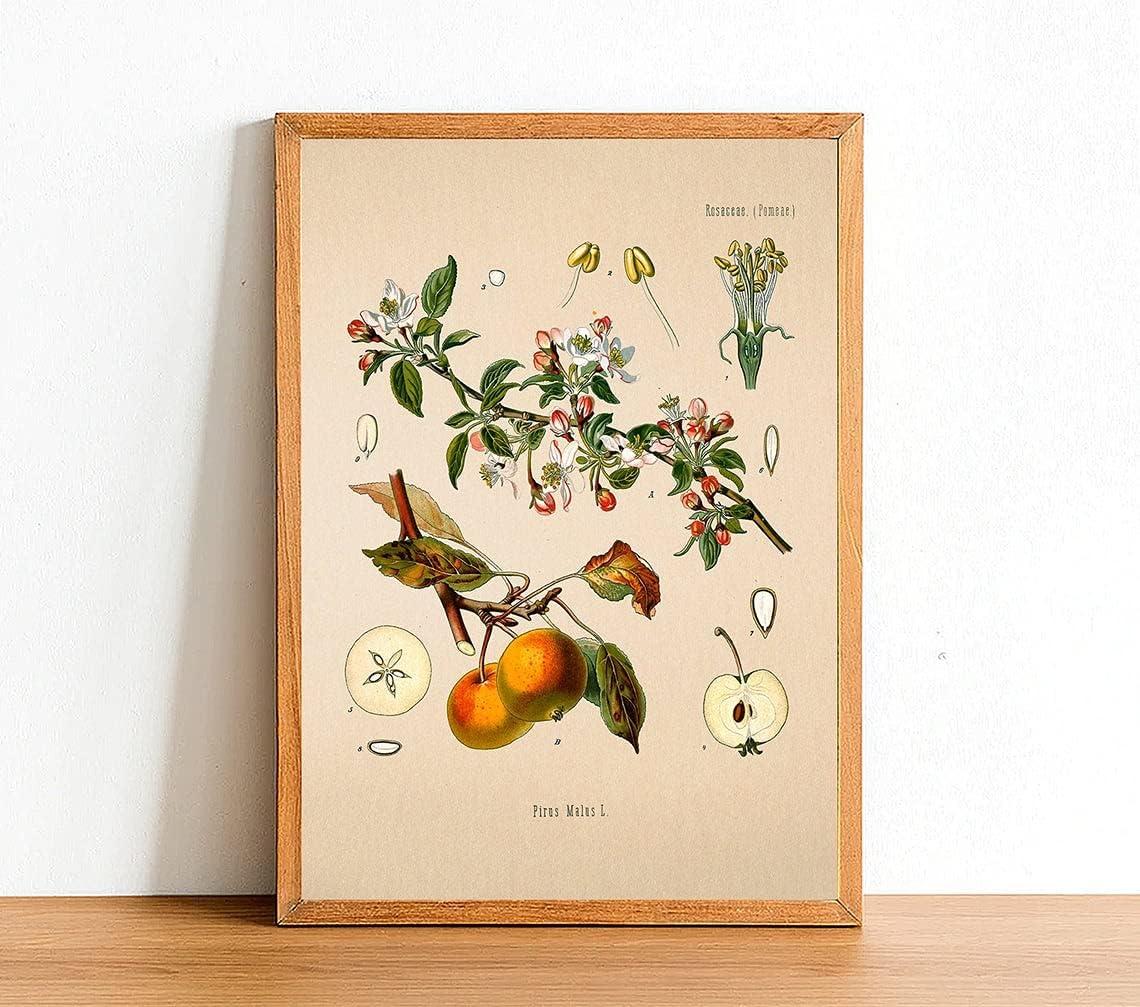 Vintage Paradise Apple Print, Antique Botanical Posters
