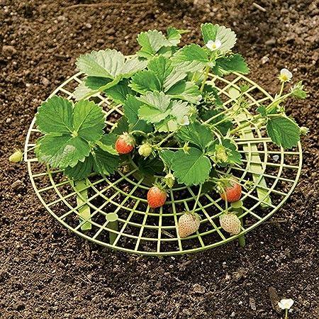 PowerBH 5 piezas Plantas de jardín Puesto de fresas Puesto de ...