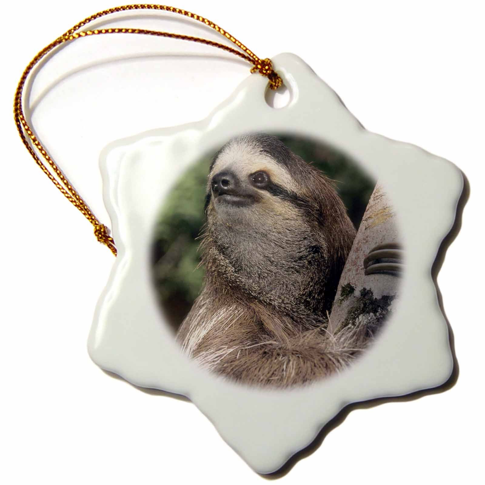 3dRose orn_87216_1 Three-toed Sloth Wildlife, Costa Rica SA22 KSC0126 Kevin Schafer Snowflake Porcelain Ornament, 3-Inch