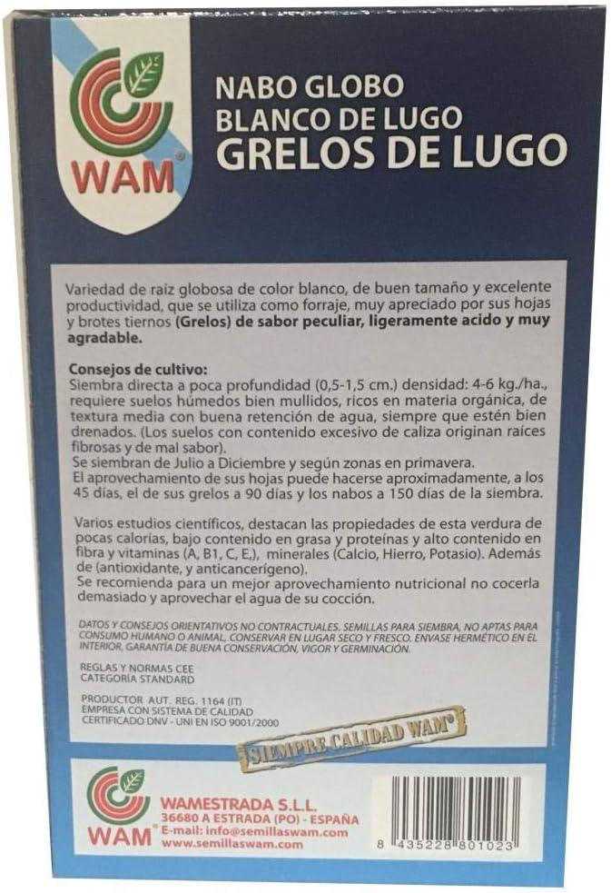 Semillas de Grelos de Lugo (250 gr): Amazon.es: Jardín