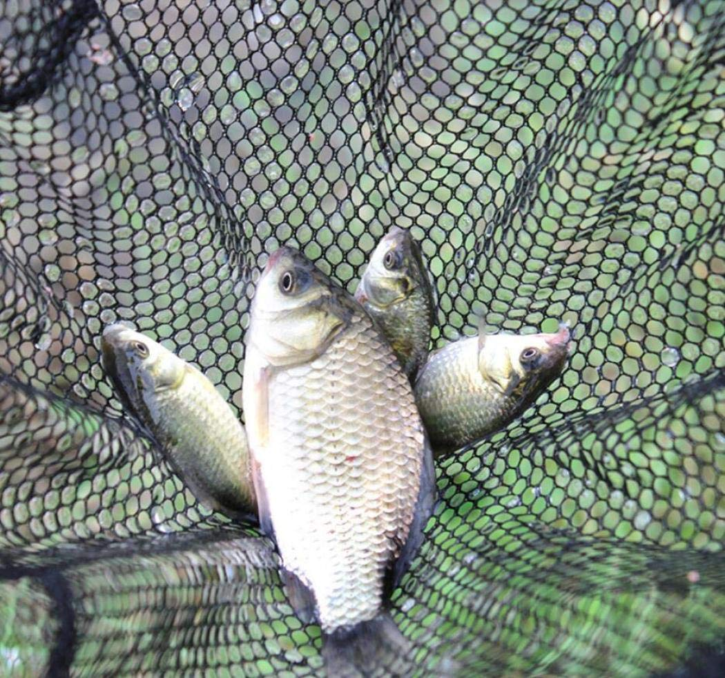 71inch Malla de Aterrizaje Malla Nylon Red Pescados Peso Ultra Ligero Seguro Captura o Liberaci/ón Goldfish Camaron,1.8m DPPAN Telescopico Plegable Vuela Red de Aterrizaje