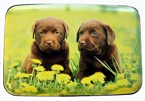 Amazon.com: Grupo higo diseño Labrador cachorros flores Robo ...