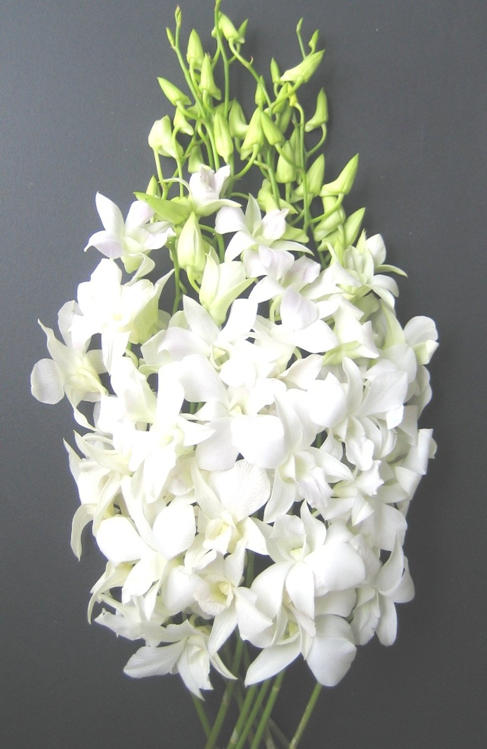 Amazon Fresh Flowers Just Orchids White Dendrobium Fresh