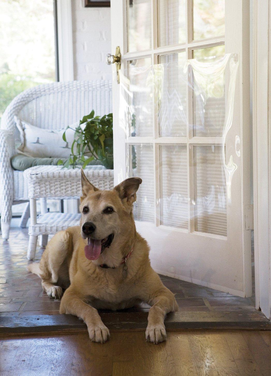 Amazon The Door Shield Pet Scratch Protector Dog Door