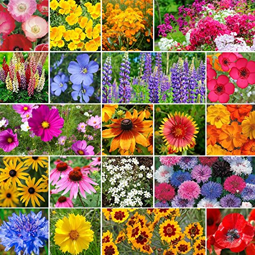 Burst Of Bloom Annual & Perennial Wildflower Seed Mix - 5 Pounds, Bulk, Mixed by Eden Brothers
