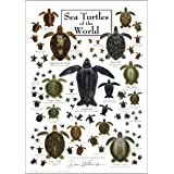 Earth Sky & Water Poster - Sea Turtles of the World