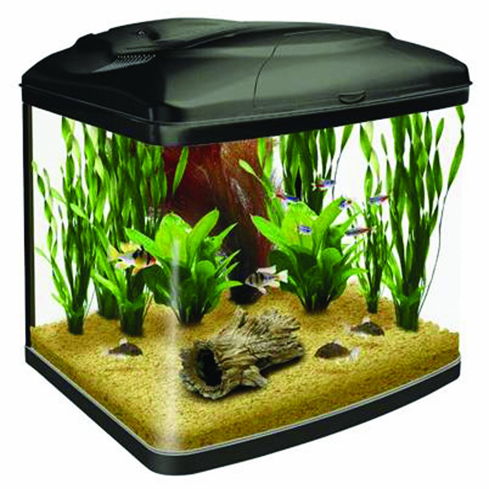 45 litre fish tanks what you need to know aquatics world for Fish tank price