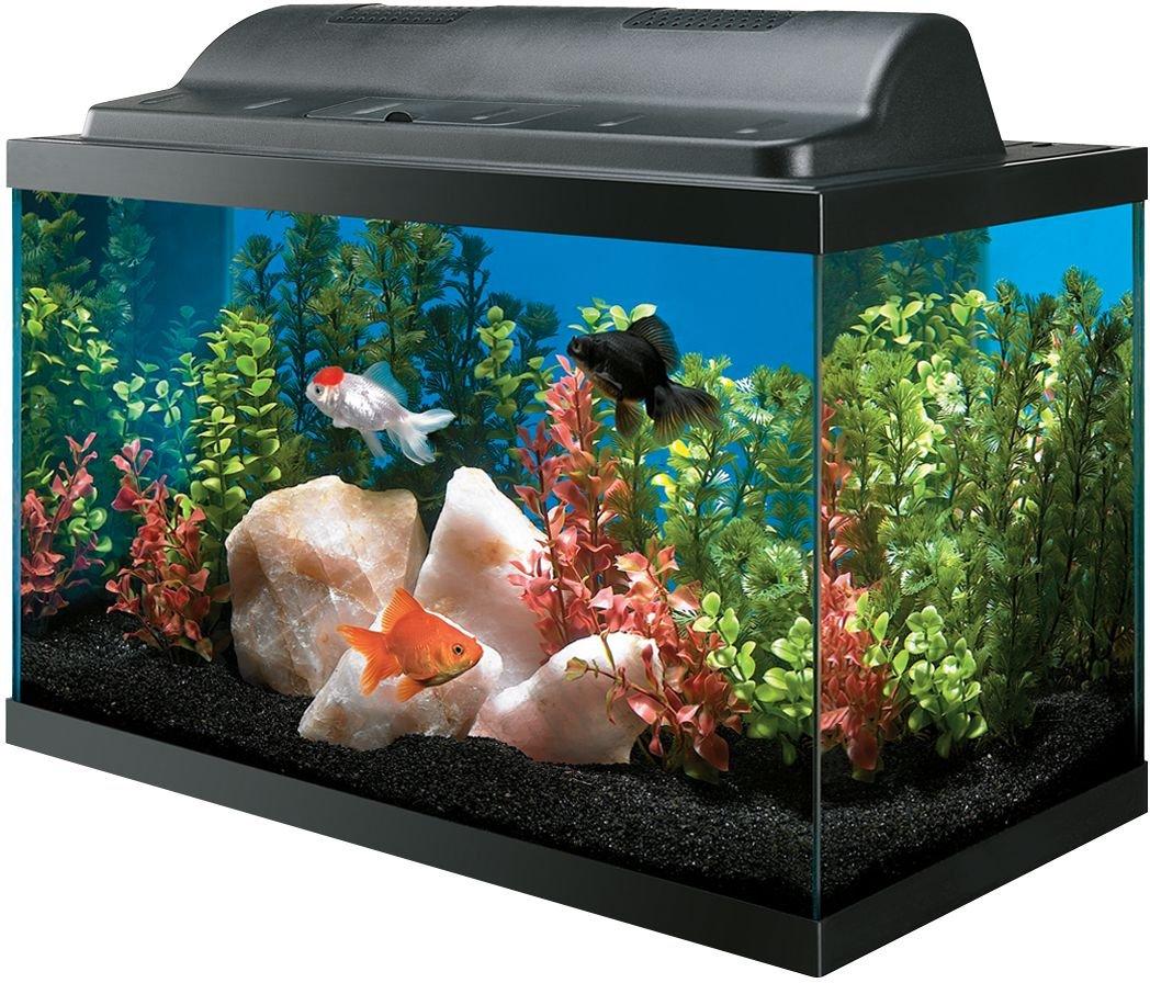 Amazon.com  All Glass Aquarium AAG09009 Tank and Eco Hood Combo 10-Gallon  Pet Supplies  sc 1 st  Amazon.com & Amazon.com : All Glass Aquarium AAG09009 Tank and Eco Hood Combo 10 ...