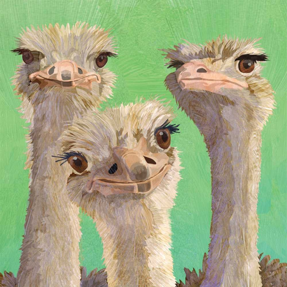 Multicolor Paperproducts Design PPD 1332789 Ostrich Amigos Lunch Paper Napkins 6.5 x 6.5