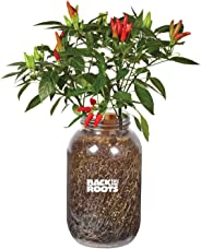 Back to the Roots Chili Windowsill Planter, 1, Red