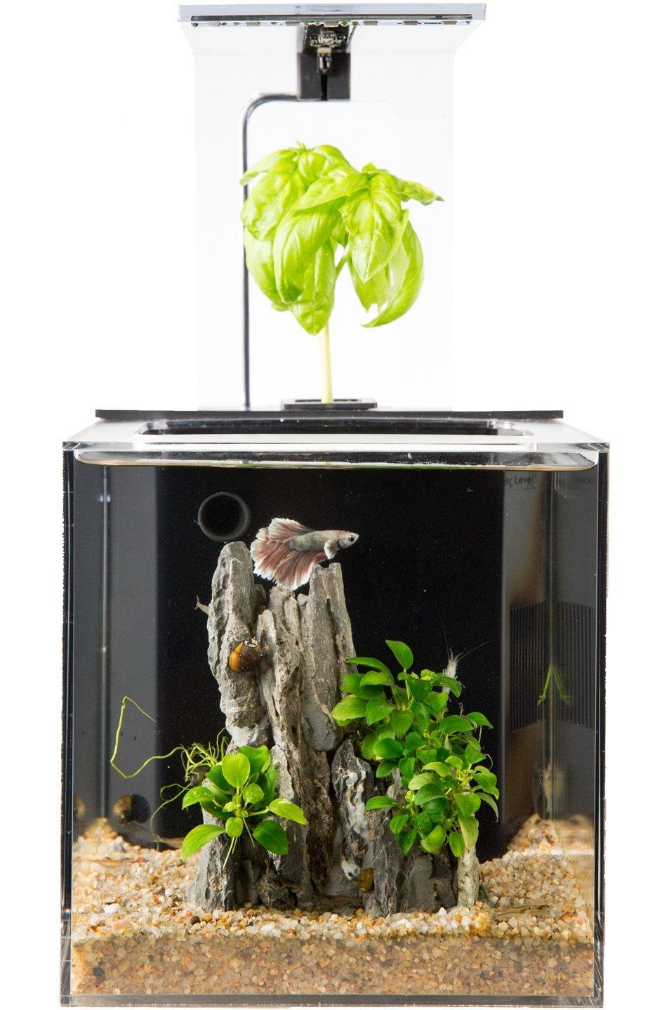 EcoQubeC Aquarium - Desktop Betta Fish Tank For Living Office And Home Décor by EcoQube