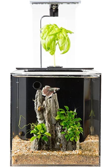 Ecoqubec Aquarium Desktop Betta Fish Tank For Living Office And Home Decor