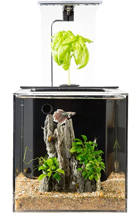 Amazoncom EcoQubeC Aquarium Desktop Betta Fish Tank For