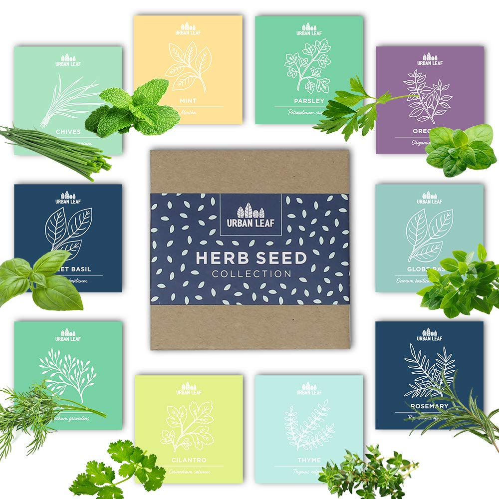 Urban Leaf - Herb Seeds for Planting Indoors (or Out!) | Dwarf and Compact Varieties | 10 Essential Herb Seed Packets for Gardening incl Basil Mint Cilantro Chives | Herb Garden Seeds Gift Non GMO