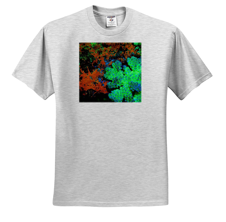 ts/_310389 Adult T-Shirt XL Fluorescing Underwater Macro 3dRose Danita Delimont Underwater