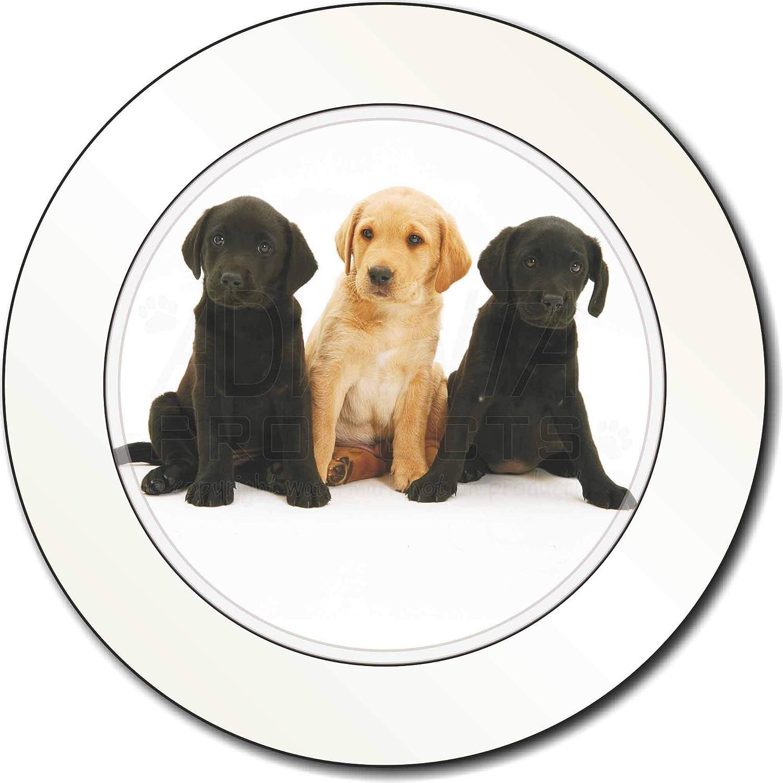 Advanta Tax Disc Holders Labrador-Welpen AutovignetteGenehmigungsinhaber Geschenk Speiseteller