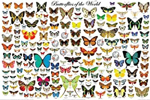 Butterflies of the World Educational Science Chart Poster - 24x36 Art Poster Print, 36x24