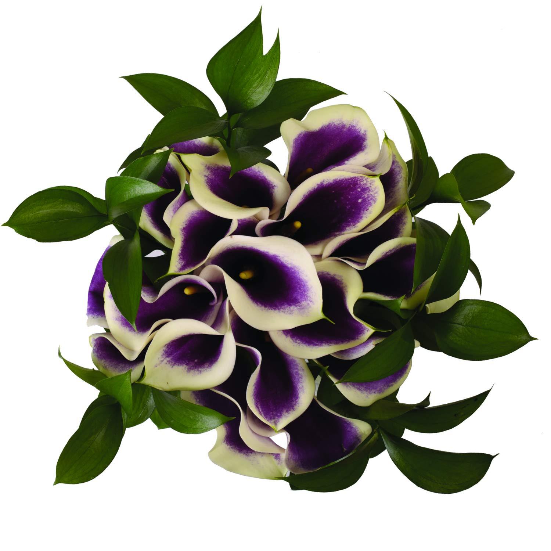 Picasso Elegance Mini Calla Bouquet - 26 Stems by Bloomingmore