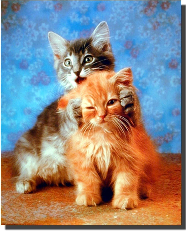 Cute Cat Hear No Evil Kittens Kids Room Wall Decor Art Print Picture Poster (16x20)