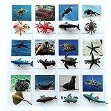 Montessori Animal Match Game Cards Marine Animal Matching Montessori Language Materials Toddlers Preschool Educational Learni