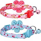 Blueberry Pet Spring Pack of 2 Cat
